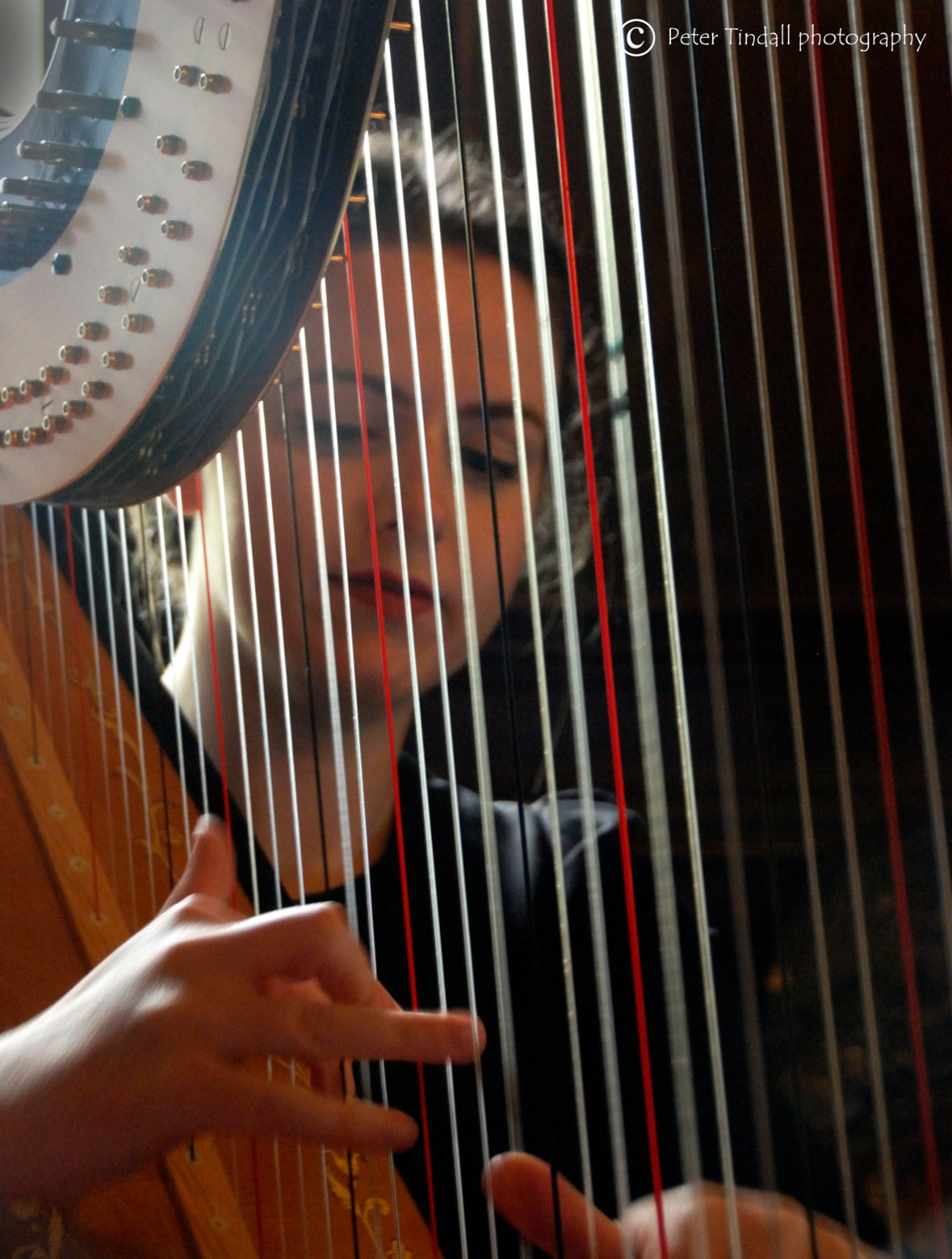 Promo The Function Harpist Harpist Denbigh